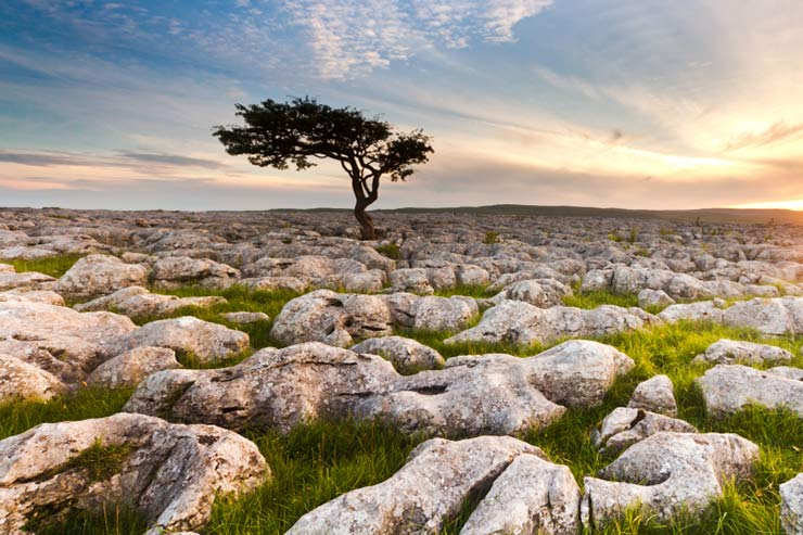 Limestone Pavements in the Yorkshire Dales